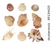 set of sea shells. isolated on... | Shutterstock . vector #89134420