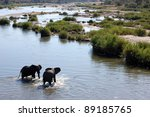 an african elephant family in... | Shutterstock . vector #89185765