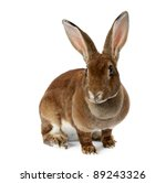 Stock photo brown bunny isolated on white 89243326