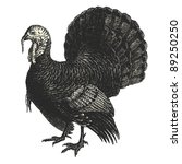 turkey   vintage engraved... | Shutterstock .eps vector #89250250