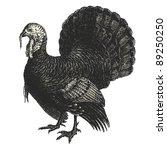 turkey   vintage engraved...   Shutterstock .eps vector #89250250