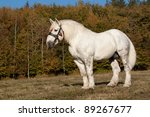 Percheron stallion posing in autumn landscape - stock photo