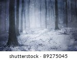 Winter storm in a forest in...
