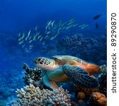 red sea diving big sea turtle... | Shutterstock . vector #89290870