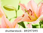 details of pink lily flowers on green background - stock photo