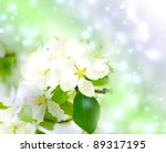 tree branch with cherry flowers ... | Shutterstock . vector #89317195