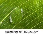Beautiful green leaf with little water drops close up. - stock photo