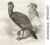 Small photo of Abyssinian Ground Hornbill old illustration (Bucorvus abyssinicus). Created by Kretschmer and Illner, published on Merveilles de la Nature, Bailliere et fils, Paris, ca. 1878