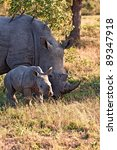 Rhino Cow And Calf In Nature...