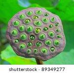 Close Up A Lotus Seeds