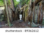 Toilet in the tropical jungle forest. Unusual natural bathroom idea. - stock photo