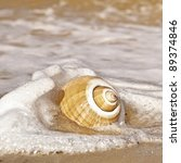 Beautiful Large Seashell With...