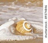 Beautiful Large Seashell With...