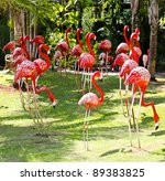 Flamingo Bird Model In The...
