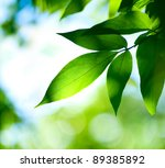 Green Leaves.nature