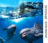 Two Dolphins Underwater And...