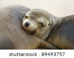 young sea lion | Shutterstock . vector #89493757