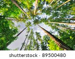 Beautiful Tall Trees Of Oregon