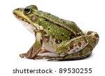 common european frog or edible... | Shutterstock . vector #89530255