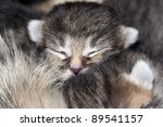 Stock photo kitten detail of the head of sleeping kitten 89541157