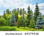 Garden With Fir Trees On...