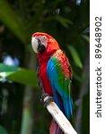 nice parrot   scarlet macaw   Shutterstock . vector #89648902