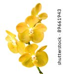 Vibrant Yellow Tropical Orchid...
