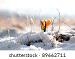 Yellow Snowdrop In High...