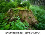 An Old Stump In The Mountainou...