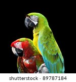 Two Colorful Macaw Parrots...