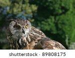 eagle owl | Shutterstock . vector #89808175