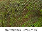 Green Iguana Skin Available Fo...