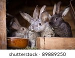 Young Rabbits Popping Out Of A...