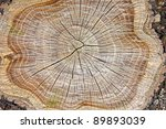 Stump Of Tree Felled   Section...