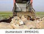 sheep transport | Shutterstock . vector #89904241
