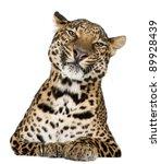 Leopard  Panthera Pardus  Lyin...