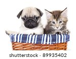 Stock photo kitten and puppy 89935402