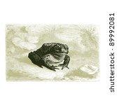 Toad   Vintage Engraved...
