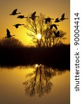 Canadian Geese Silhouette At...