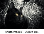 black cat with sharp yellow eyes B&W conversion - stock photo