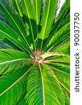Palm Tree Closeup On The Leaves