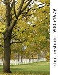 Autumn Scenic On A Horse Farm...