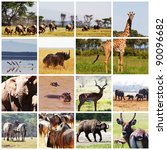 african safari in etosha... | Shutterstock . vector #90096682