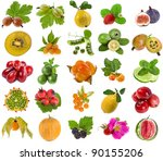 collection set of tasty fruits... | Shutterstock . vector #90155206
