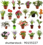 Collection Set Of  Houseplants...