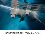 Two Diving Crabeater Seals ...