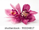 Stock photo orchid isolated on white background 90324817