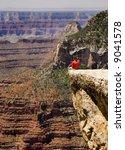 canyon sitter south rim grand canyon - stock photo