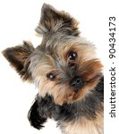 portrait of yorkshire terrier... | Shutterstock . vector #90434173
