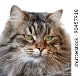 portrait of a cat soft focused... | Shutterstock . vector #90457918